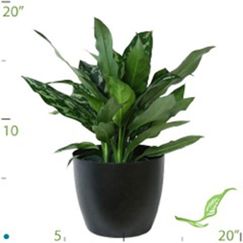 Office Plant Catalog  indoor plants for lobbies  reception