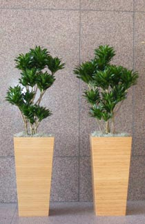 San Francisco Plant Container Rental - Paradise Designs Plantscapes is the leading source for office plants, plant rental, and interior plant design and maintenance in the entire San Francisco Bay Area, San Jose and Oakland.